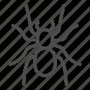 spider, nature, insect, fear, arachnid, tarantula, antennae