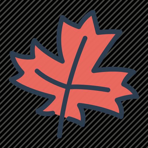 autumn, ecology, leaf, nature icon