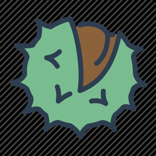 autumn, marron, nut, сhestnut icon