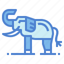 animal, elephant, wildlife, zoo icon