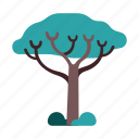 africa, kenya, nature, safari, sclerocarya, sclerocarya tree, tree icon