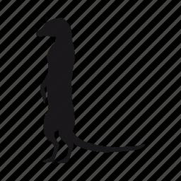 suricata icon