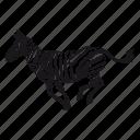 zebra, cebra, zoo