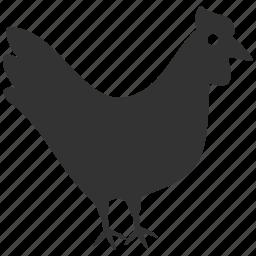 agriculture, bird, chicken, cock, farm, hen, meat icon