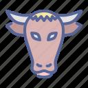 bull, cow, livestock, ox