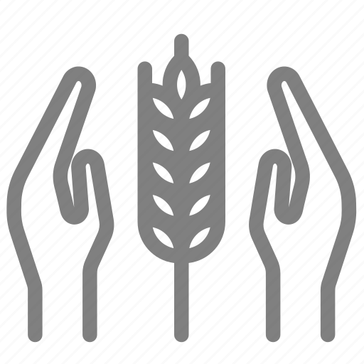 agriculture, farming, form, grow, implant, plant, rice icon