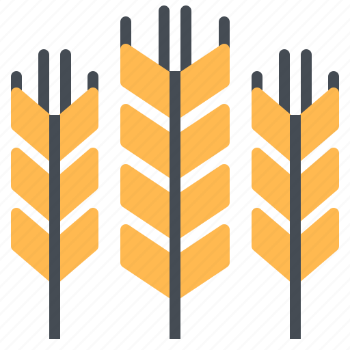 agriculture, cereal, food, wheat, whole icon
