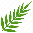 christ, hosanna, judaism, leaves, palm