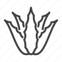 aloe, aloe vera, leaves, plant, succulent, vera icon