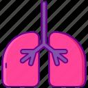 human, lungs, organ