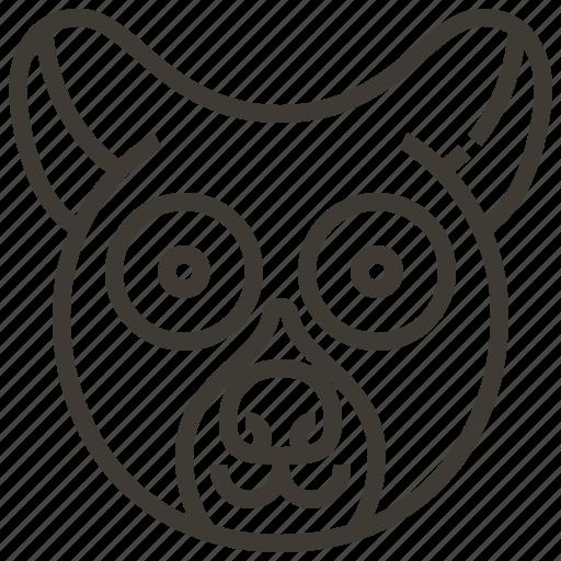 animal, face, head, loris icon