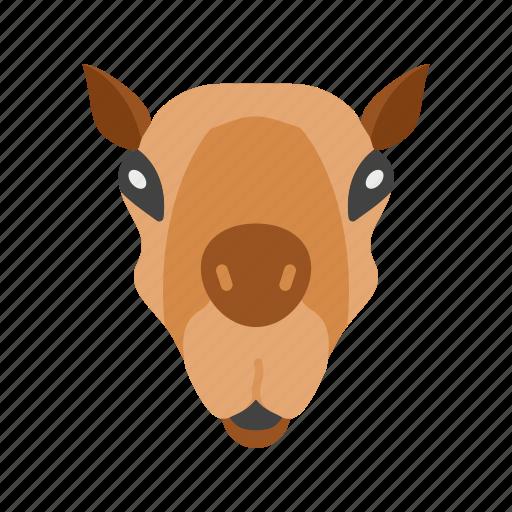animal, camel, desert, egypt, safari, sand, yellow icon