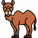 animal, camel, desert, zoo icon