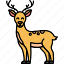 animal, deer, antlers, woods icon