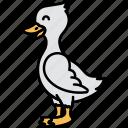 animal, duck, bird, white