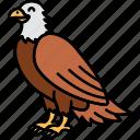 animal, brid, eagle, large icon
