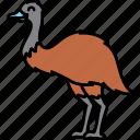 animal, brid, emu, large icon