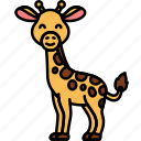 animal, giraffe, wild, zoo