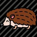 animal, hedgehog, spike, wild