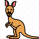 animal, kangaroo, australia, wild