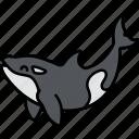 killer, orca, whale, animal icon