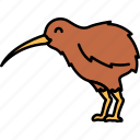 animal, bird, kiwi, okarito icon