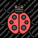 bug, insect, ladybug, animal