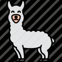 animal, llama, alpaca, wool