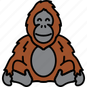 ape, monkey, orangutan, animal