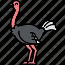 animal, bird, ostrich