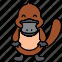 animal, platypus, australia, water