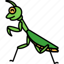 insect, praying, mantis, animal