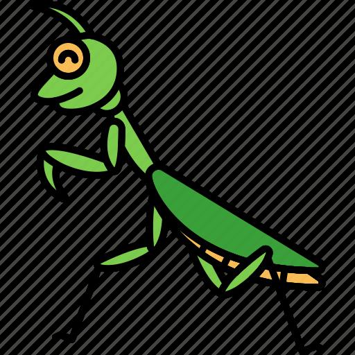 Insect, mantis, praying, animal icon - Download on Iconfinder