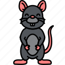 animal, rat, rodent, gray