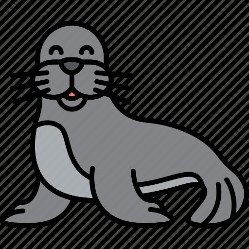 animal, mammal, sea, seal icon