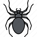 animal, bug, insect, spider icon