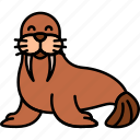 animal, morse, walrus, sea