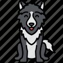 wolf, animal, coyote, lobo