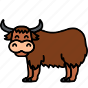 buffalo, bull, yak, animal