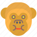 eat, face, food, full, monkey, smile
