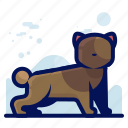 animal, cat, pet, rodent icon