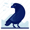 animal, bird, crow, wildlife icon