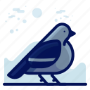 animal, bird, pidgeon, wildlife icon