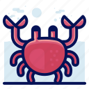 crab, ocean, sea, wildlife