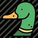 animal, bird, duck, poultry, wildlife