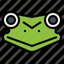 amphibian, animal, frog, head, wildlife