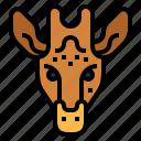 animal, animals, giraffe, mammal, wildlife