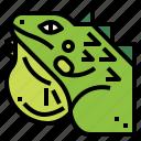 animal, iguana, lizard, reptile, wildlife