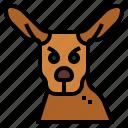 animal, kangaroo, mammal, marsupial, wildlife