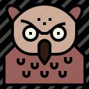 animal, bird, head, owl, wildlife